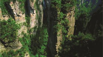 索溪峪的野思维导图_索溪峪的野
