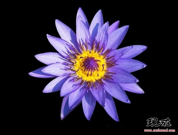 轴对称 鲜花